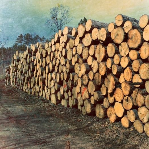 Timber Sale Offering