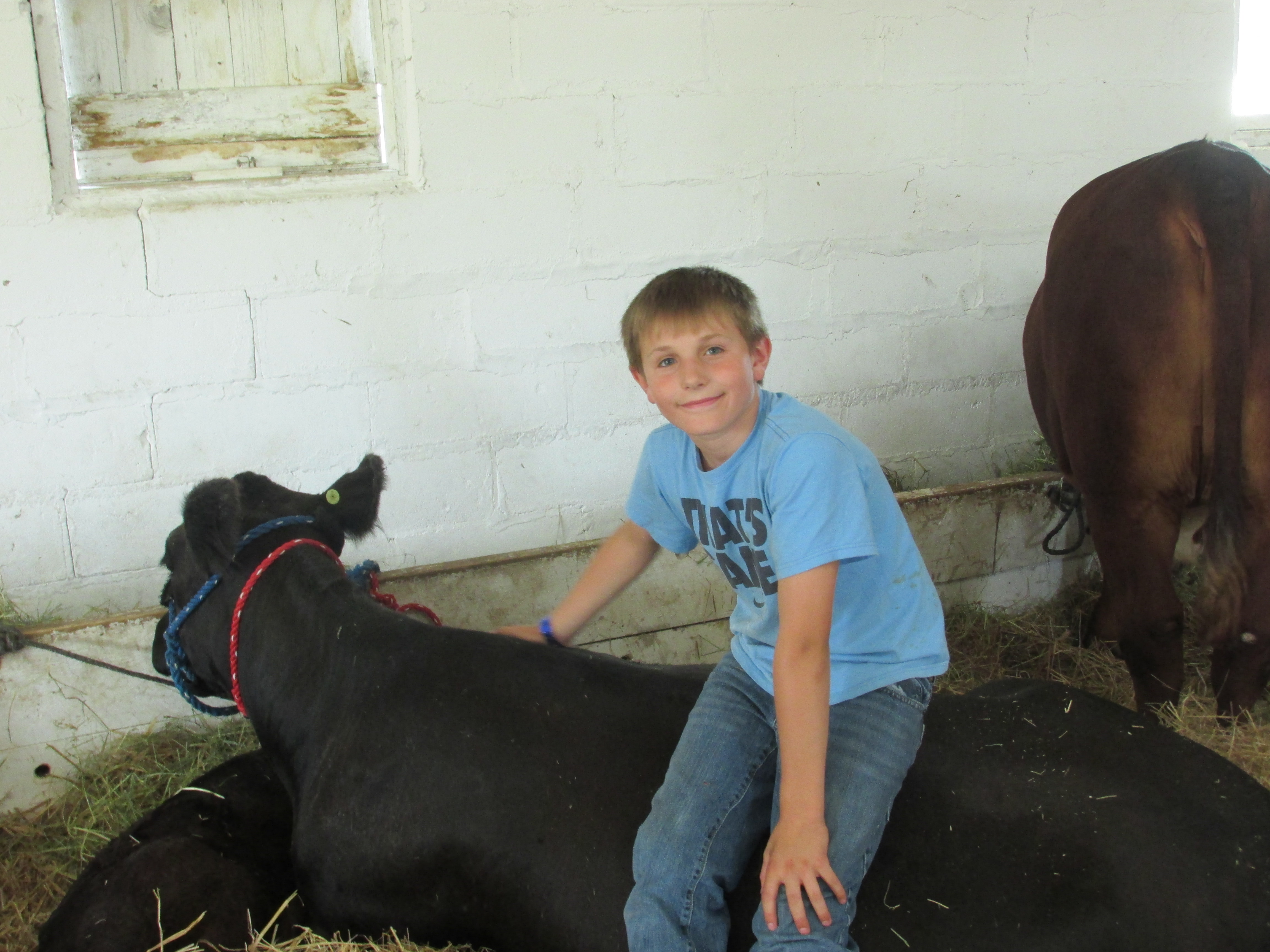 Boy and his steer