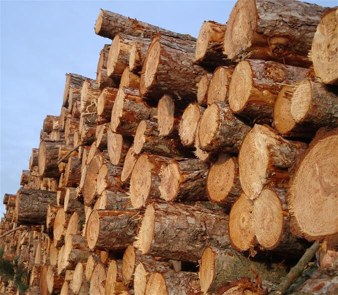 Fall 2014 Timber Sales